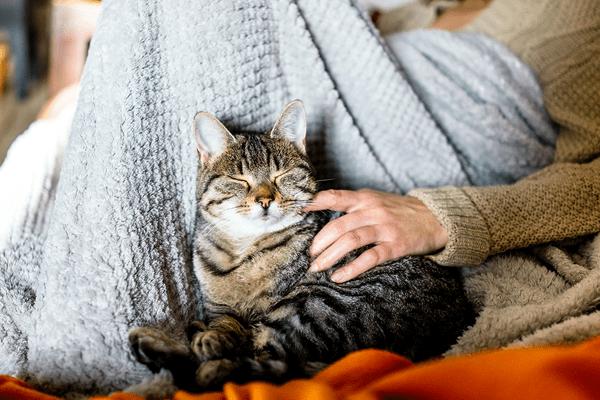 Top 5 Benefits of Having a Pet
